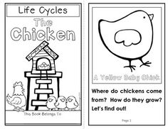 Chicken Life cycle {Craft and Printables in English and