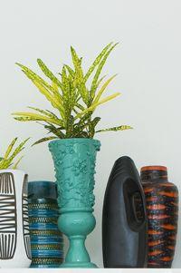 1000 images about Kamerplanten  houseplants on Pinterest