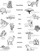 Biome Map Coloring Worksheet Ask A Biologist