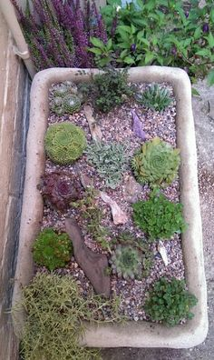 Alpine Garden In Belfast Sink What A Neat Idea For An Old Sink