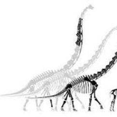 Deer Skeleton Diagram What Is A Workflow Anatomy, Giraffe Receive Muscles, Anatomy Creatures, | Muscle Pinterest ...