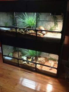 Love Stacked reptile enclosures  Animal Stuff