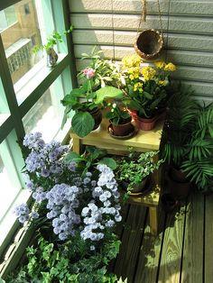 My Lil Balcony Gardening Etc Pinterest Balcony Gardening