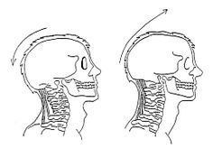 Scapula- Friend or Enemy of the Bench- Juggernaut Training