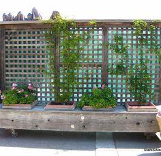 Metal Garden Edging Steel Garden Design Ideas Pinterest