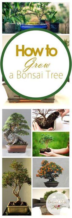 How to Grow a Bonsai