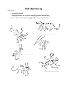 Easy Dichotomous Key Worksheet. dichotomous worksheet
