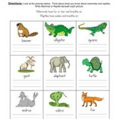 Animal Classification Printables