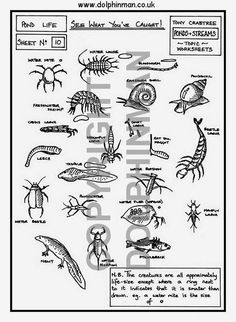 Crayfish Corner