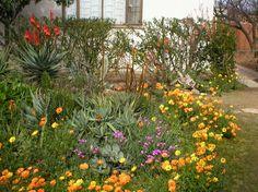 Landscape Garden Types Indigenous Cape Town Gardening Ideas