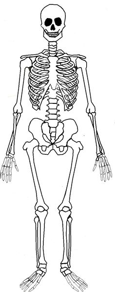 Excretory System Coloring Coloring Pages