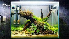 1000+ images about aquascapes/aquariums on Pinterest ...