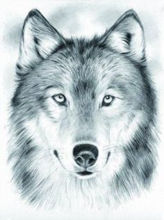Wolf love wow whoever the artist is this is really good   Art  Pinterest  Wolf