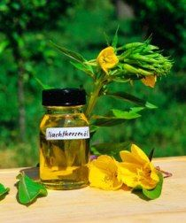1000 images about evening primrose oil on pinterest primroses oil and benefits of