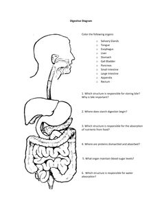 1000+ images about Science: Human Anatomy: Digestive
