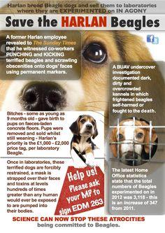 1000 Images About Dog Leaflets On Pinterest Leaflets