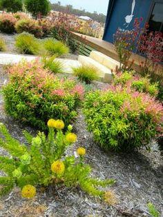 Australian Native Garden Design Ideas Google Search My Dream