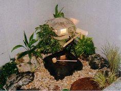 Jardin Miniature Interieur Terrarium Et Aquarium Nano