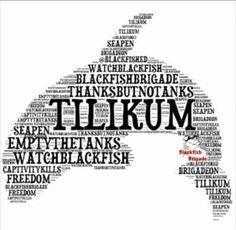 1000+ images about ♥ Orca Tilikum ♥ † on Pinterest