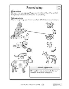 animal babies worksheet preschool | ... Right?