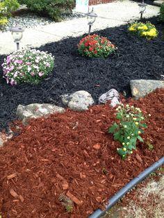 1000 colored mulch