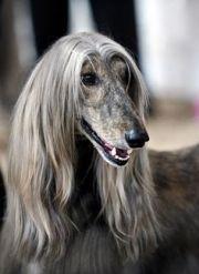 1000 greyhounds