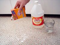 Image Result For Best Way To Get Dog Smell Out Of Carpet