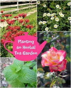 Herbal Tea Gardens Relaxation Garden Plan—grow Calming Herbs Such