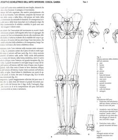 arms-and-shoulders-bone-labeled-human-anatomy-diagram-page