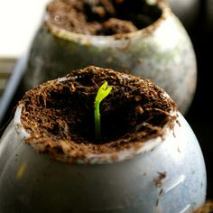 1000 images about Planten stekken  on Pinterest