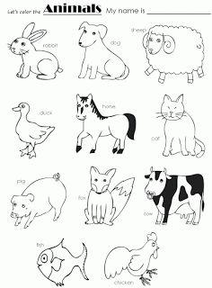 1000+ images about Animales en inglés y mucho más. on