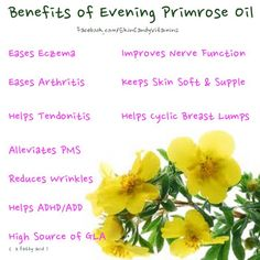 1000 images about evening primrose on pinterest primroses oil and hot flashes