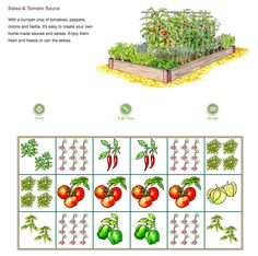 How To Grow A Salsa Garden Complete Guide And Layout Raised