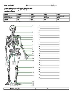 Use this quiz when studying the bones of the body! This