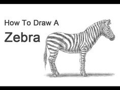 How to Draw a Lion Roaring, Roaring Lion, Step by Step