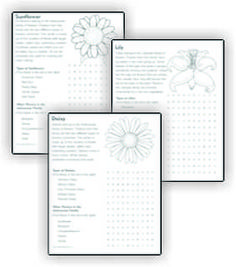 Daisy flowers, Girl scouts and Colors on Pinterest