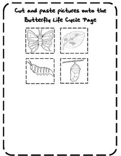 1000+ images about Hungry Caterpillar/butterflies on