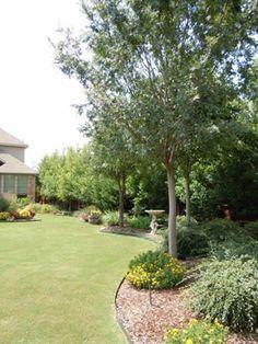 Loft & Cottage Plants Along Fence Line Landscape Design