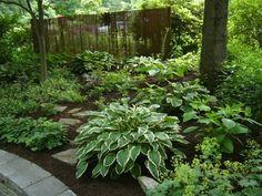 Silver Frost Pear Tree A Great Plant Garden Pinterest