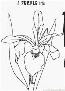 1000+ images about line drawings of irises on Pinterest