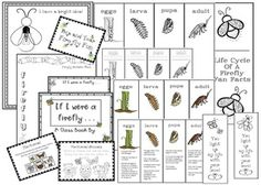 1000+ images about Bug Insect activities on Pinterest