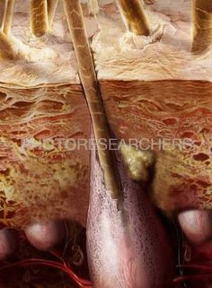 1000 images about hair science on pinterest hair follicles electron microscope and scanning