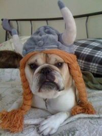 1000+ images about Dog Halloween Costumes on Pinterest ...