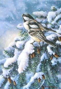 1000 Images About Bird Art Gallery On Pinterest