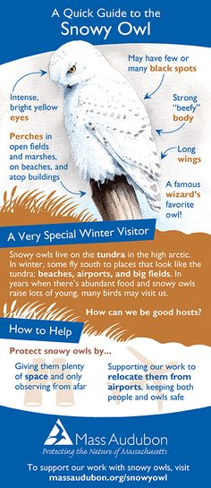 snowy owl adaptations diagram hpm fan controller wiring | outdoor science school - activities for in the classroom pinterest ...