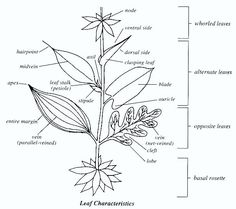 Handy visual for kids learning the parts of plants