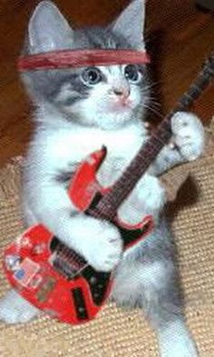 1000 images about Animals Rock on Pinterest  Rock n