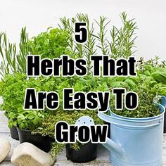 Top 7 Best Herbs To Grow In Containers Gardening Pinterest