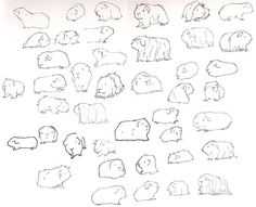 Printable guinea pig coloring page. Free PDF download at