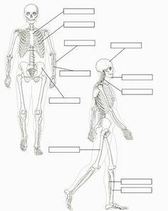 Ficha de las articulaciones del cuerpo para primaria